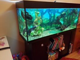 Juwel 240l fish tank aquarium