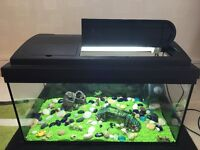 30x30x60 cm fish tank