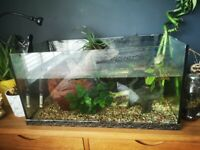 Tropical fish tank including fish and plants