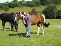 Jumping Mare - sold in foal