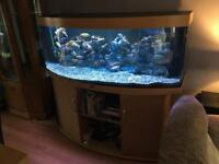 Juwel 450 Bow Front Aquarium & Cabinet