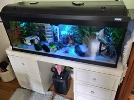 Fish tank/filter/fish and accessories.