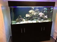 5x2x2ft new condition fish tank aquarium with full setup (delivery/installation)