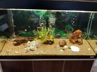 Fluval 200 fish tank for sale