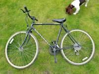 Men's bike monte carlo limited edition