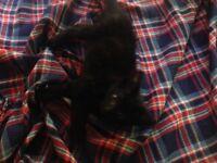 4 kittens(7weeks) £20.00 each