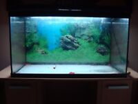 Aquael LEDDY 80, 105 Litre Aquarium and Light Wood Cabinet with many extras