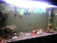 Fish tank and tropical fish and plec for sale