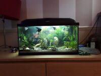 Two aquariums 60 and 80 liters. both have heater and filter