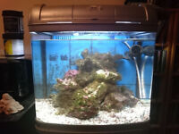 River Reef 48L Interpet - Marine tank setup - Stand, Pump Sand, Live Rock, Heater, Filtration media