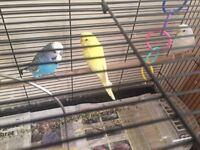 3 Budgies cage and stand