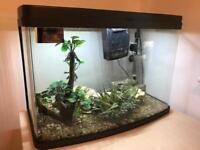 Interpet 64 litre curves glass aquarium with LED lights