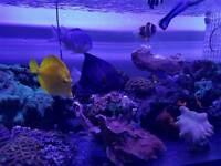 Marine aquarium fishes for sale
