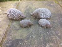 Concrete Hedgehogs ( family)
