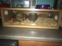Pet snake with aquarium and equipments