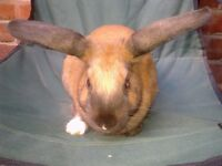 FRIENDLY FEMALE RABBIT: ABOUT 5 MONTHS OLD