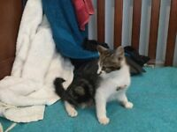 Lovely baby kitten looking for a home to be loved