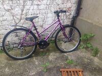 Purple integra bike