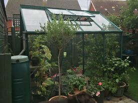 Very good Greenhouse for sale