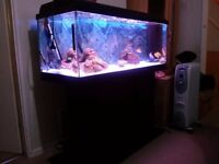 African fish tank for sale