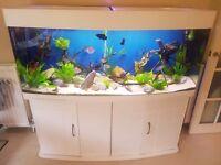 540L fish tank full setup for sale