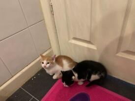 Beautiful kitties / cats available immediately