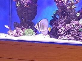 marine corals , fish