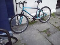 Raleigh Activator adult mountain bike