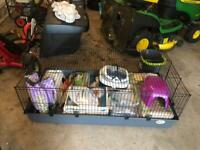 Large Guinea pig/rabbit cage with accessories