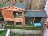 Guniea pig outside cage
