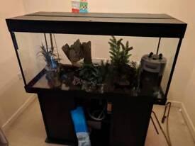 Great fish tank