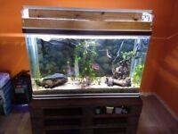 Fish tank 4 ft 300 litres