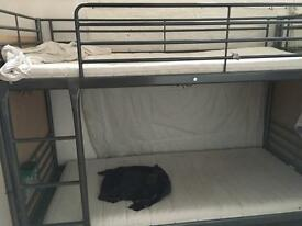 Bunk beds up for rent