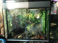 Very large crested gecko set up and geckos