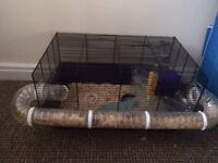 3 male dwarf hamsters for sale