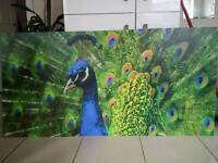 Beautiful Unique Peacock pictureboard poster art 1500mm x 750mm x 3mm Indian Exotic