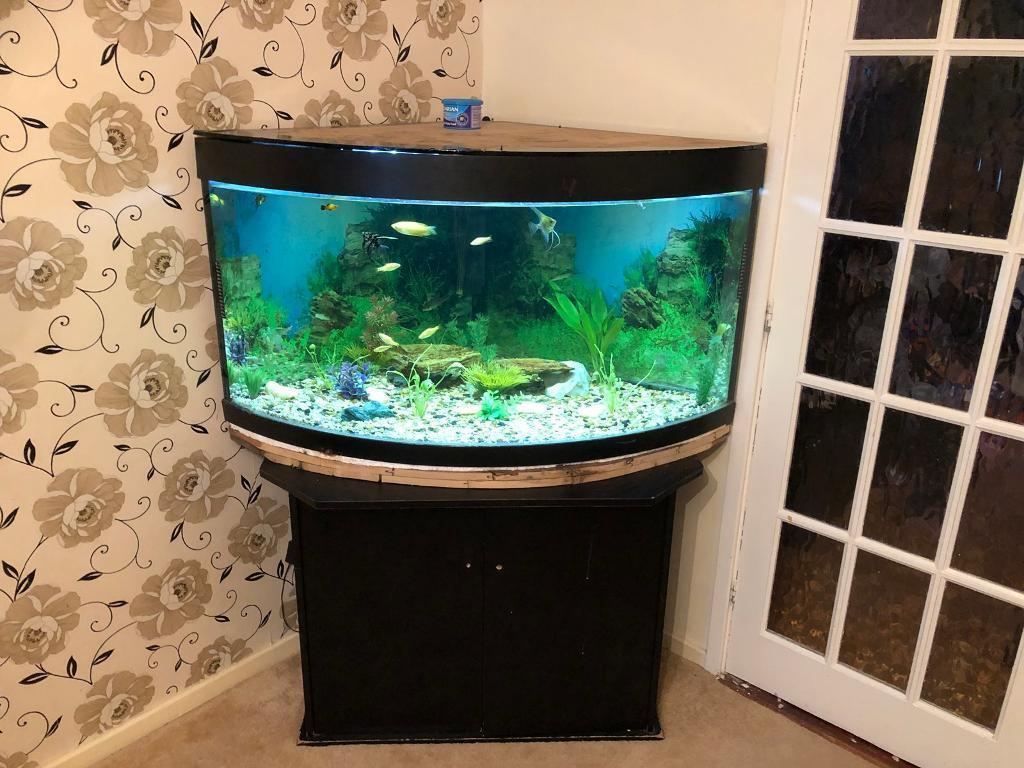 350ltr juwel trigon fish tank