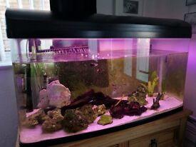 Fish Tank & external filter + extras