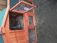 rabbit hutch house