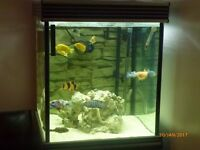Large 190L Cube Glass Fish Tank Complete Aquarium with Fish.