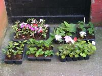 flower lot ideal for all gardens
