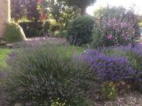 Gardener wanted - Eaton