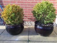 2 Ceramic Garden pots