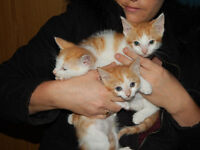 kittens girls and boys looking for forever homes