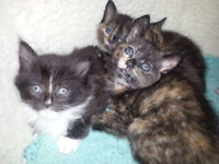 four cute kittens are looking for a new home