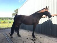Project Mare For Sale