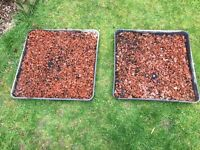 6 Greenhouse trays with gravel for drainage