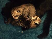 Kittens Boys