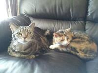 2 beautiful cats looking for their forever home