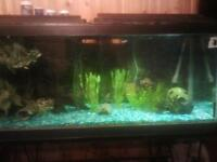 75 GALLON FISH TANK & STAND, Glass
